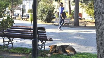 Córdoba: las mascotas podrían tener seguro