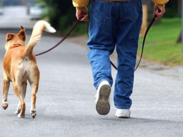 Pólizas de seguro para propietarios de perros