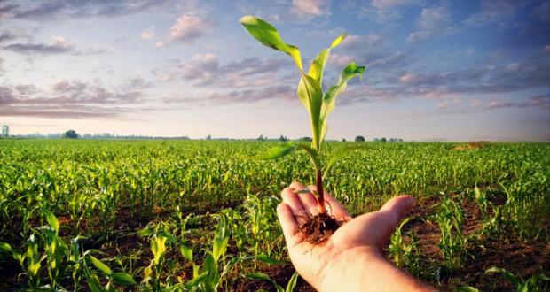 Las primas de seguro agrícola para los productores tendrán una parte subsidiada