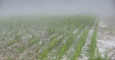 Uruguay profundiza adopción de seguros agrícolas climáticos