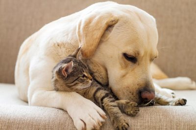 Prepaga para mascotas: un nuevo servicio para los perros y gatos de la familia